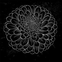 white chrysanthemum outline with gray spots on a black background