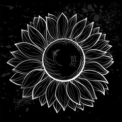 beautiful black and white sunflower isolated.