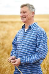 Farmer In Wheat Field Inspecting Crop