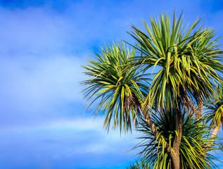 Ti kouka – New Zealand cabbage palm tree, landscape with a blu
