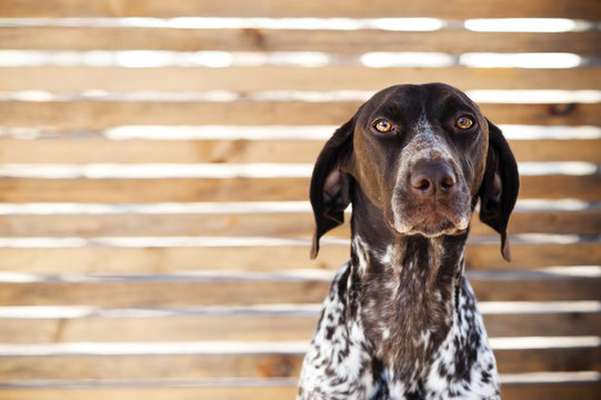 sad looking dog in front of wooden fence.