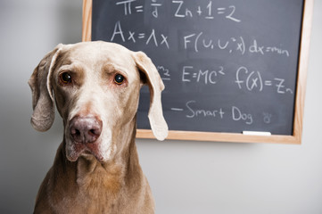 cute dog in front of a chalkboard board has math equations written on it