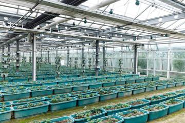 interior of vegetable greenhouse