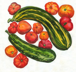 Zucchini and tomatoes. Watercolor painting
