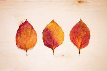Three red-yellow leaves on a board