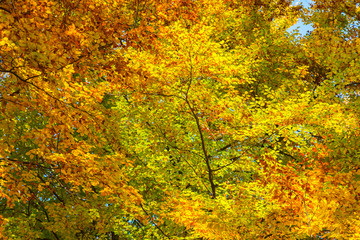 Colorful autumn background