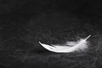 Trauerkarte - Einzelne weiße Feder