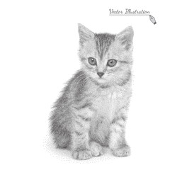Vector illustration cat in black and white graphic style