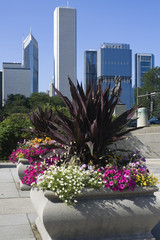 Fototapete - Flowers in downtown Chicago