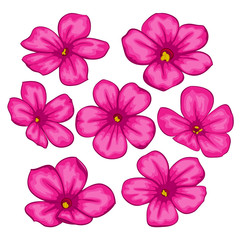 Beautiful Vector flowers set. Colorful floral collection with pink flowers.
