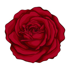 beautiful red rose with effect watercolor isolated on white background.