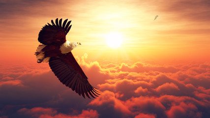 Fish Eagle flying above clouds Wall mural