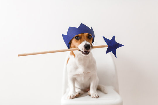 Dog with the magic wand and crown