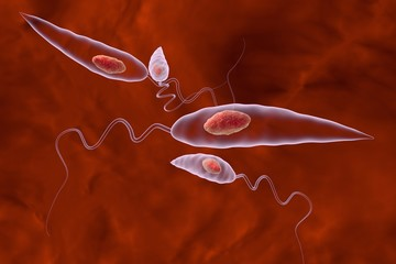 Leishmania. Promastigotes of Leishmania parasite which are found in mosquito midgut or laboratory cultures. Leishmania tropic, Leishmania major, Leishmania donovani or other Leishmania