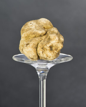 Still life of a truffle placed on the pedestal in glass on black background