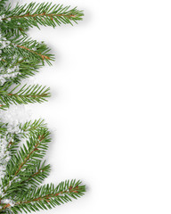 fir branches border on white background