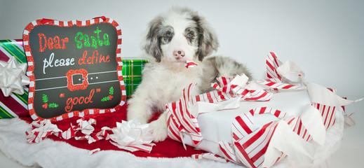 Wall Mural - Bad Christmas Puppy!