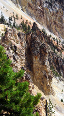 Rocky monoliths of eroded sandstone line the walls of the Grand Canyon of the Yellowstone.  Green pine grows in corner of photo.
