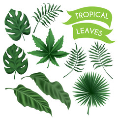 vector tropical leaves set