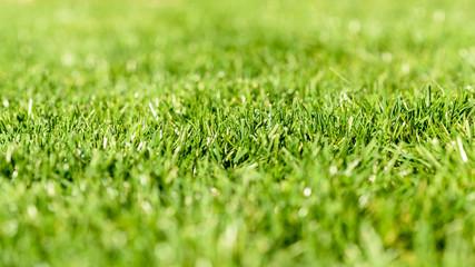 Fresh Green Grass Texture Background