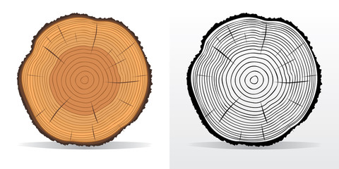 Tree rings and saw cut tree trunk