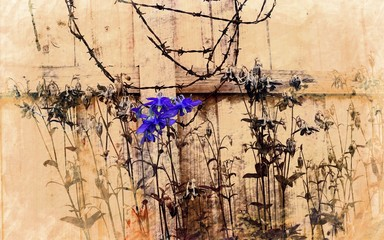 Selective colouring of columbine flowers against olf wooden fence with retro grunge texture applied