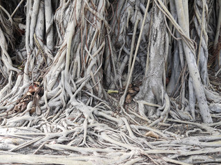 root of the tree. The roots of the tree were for a long time