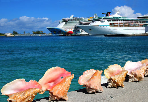sea shells and cruise ships on background
