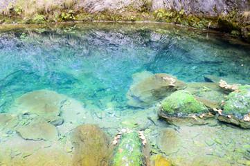 Tauz underground spring, Apuseni mountains, Romania