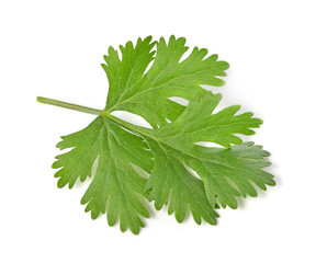 parsley isolated on white background.