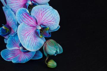 Obraz Bunch of violet orchids  - fototapety do salonu