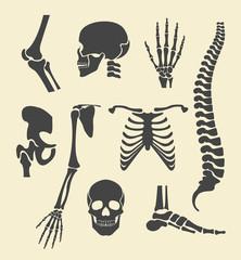 Human skeleton. Vector black illustration set