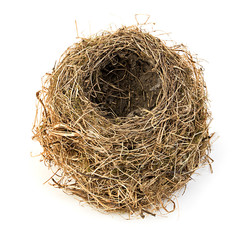 Original empty bird's nest close-up isolated on a white background.