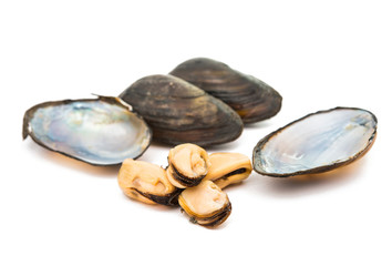 group of boiled mussels in shells isolated