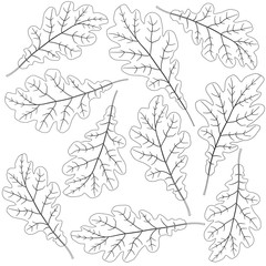 Wall Mural - contoured oak leaves