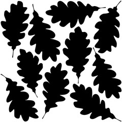 Wall Mural - oak leaves silhouette