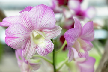 Orchids are a favorite in the garden.
