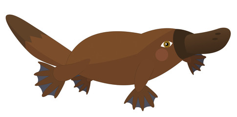 platypus photos royalty free images graphics vectors videos rh stock adobe com platypus clipart png perry the platypus clipart
