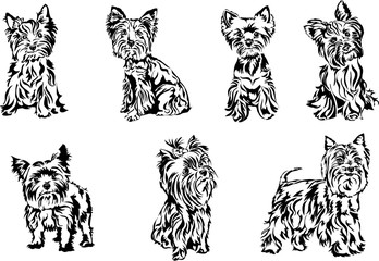 Yorkshire terrier, graphics