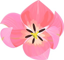 tulip top view