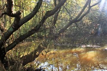 Fototapeten Natur herfst natuur