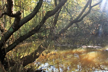 Photo sur Plexiglas Nature herfst natuur