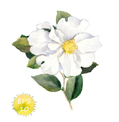 White flower. Watercolor botanical illustration