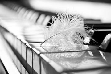 Feather closeup on piano keyboard in black and white