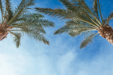 Two palm treetops against a sunny sky