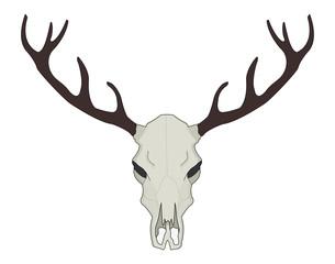 Deer skull vector illustration. Color