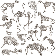 bones and skulls of different animals - freehands