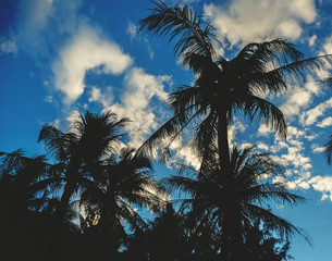 Palms silhouettes over blue sky with white clouds.