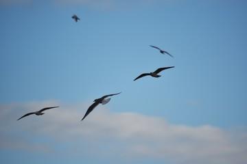 Mouettes dans le vent