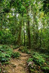 ein kleiner Trampelpfade im grünen dichten Dschungel in Costa Rica